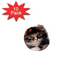 Curious Kitty 1  Mini Button Magnet (10 pack)