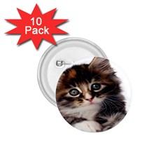 Curious Kitty 1.75  Button (10 pack)