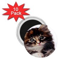 Curious Kitty 1 75  Button Magnet (10 Pack)