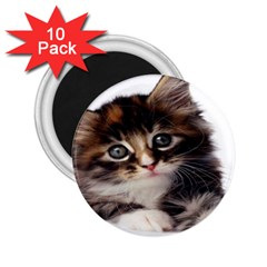 Curious Kitty 2.25  Button Magnet (10 pack)
