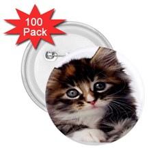 Curious Kitty 2.25  Button (100 pack)