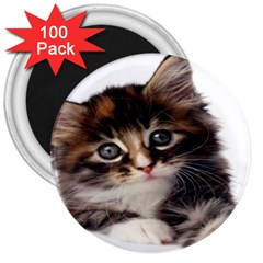 Curious Kitty 3  Button Magnet (100 pack)