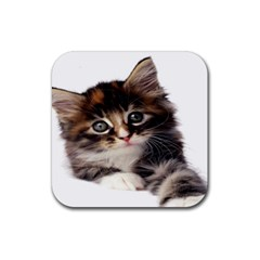 Curious Kitty Drink Coaster (Square)