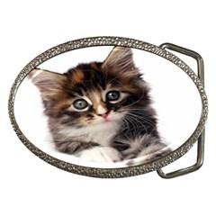 Curious Kitty Belt Buckle (Oval)
