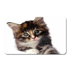 Curious Kitty Magnet (rectangular)
