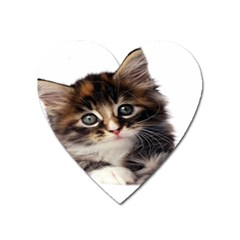 Curious Kitty Magnet (heart)