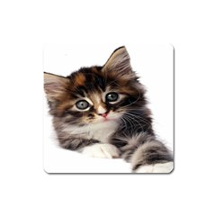 Curious Kitty Magnet (Square)
