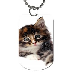 Curious Kitty Dog Tag (one Sided)