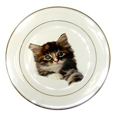 Curious Kitty Porcelain Display Plate