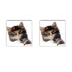 Curious Kitty Cufflinks (Square)