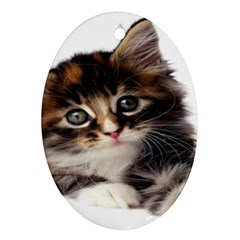 Curious Kitty Oval Ornament (Two Sides)