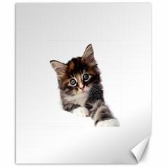 Curious Kitty Canvas 8  x 10  (Unframed)