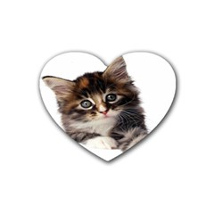 Curious Kitty Drink Coasters (Heart)