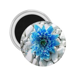 Blue 2.25  Button Magnet