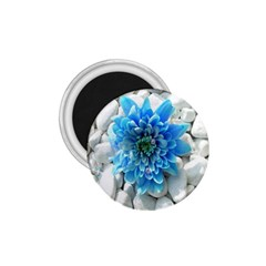 Blue 1.75  Button Magnet