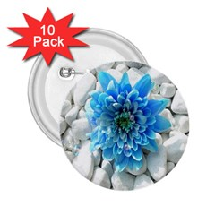 Blue 2 25  Button (10 Pack)