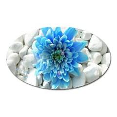 Blue Magnet (Oval)