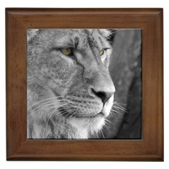 Lion 1 Framed Ceramic Tile