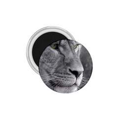 Lion 1 1 75  Button Magnet