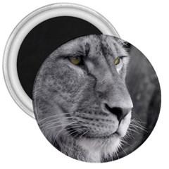 Lion 1 3  Button Magnet