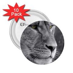 Lion 1 2 25  Button (10 Pack)