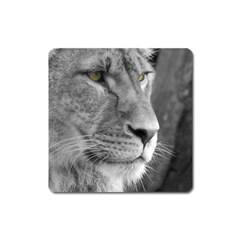 Lion 1 Magnet (Square)