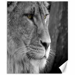 Lion 1 Canvas 8  x 10  (Unframed)