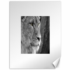 Lion 1 Canvas 36  x 48  (Unframed)
