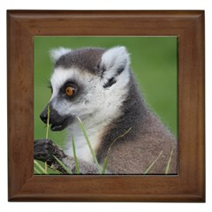 Ring Tailed Lemur  2 Framed Ceramic Tile