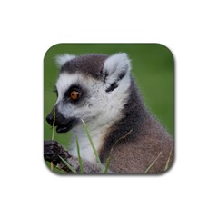 Ring Tailed Lemur  2 Drink Coasters 4 Pack (square)