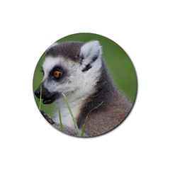 Ring Tailed Lemur  2 Drink Coasters 4 Pack (round)