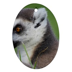 Ring Tailed Lemur  2 Oval Ornament (Two Sides)