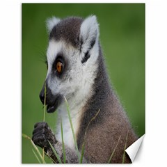 Ring Tailed Lemur  2 Canvas 12  x 16  (Unframed)