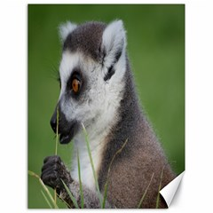 Ring Tailed Lemur  2 Canvas 18  x 24  (Unframed)