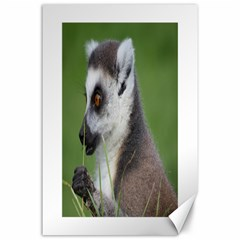 Ring Tailed Lemur  2 Canvas 24  x 36  (Unframed)