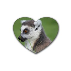 Ring Tailed Lemur  2 Drink Coasters 4 Pack (heart)