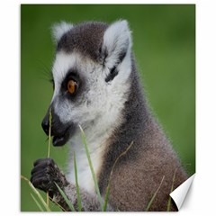 Ring Tailed Lemur  2 Canvas 8  x 10  (Unframed)