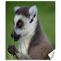 Ring Tailed Lemur  2 Canvas 20  x 24  (Unframed)