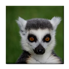 Ring Tailed Lemur Ceramic Tile
