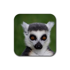 Ring Tailed Lemur Drink Coasters 4 Pack (Square)