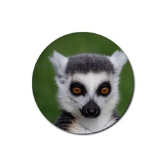 Ring Tailed Lemur Drink Coaster (Round)