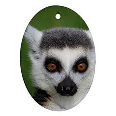 Ring Tailed Lemur Oval Ornament (two Sides)