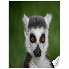 Ring Tailed Lemur Canvas 12  x 16  (Unframed)