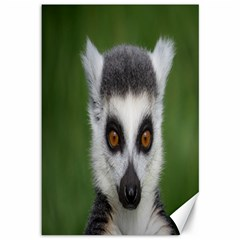 Ring Tailed Lemur Canvas 12  x 18  (Unframed)