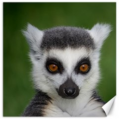 Ring Tailed Lemur Canvas 16  x 16  (Unframed)