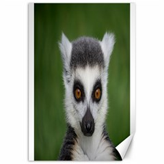 Ring Tailed Lemur Canvas 20  x 30  (Unframed)