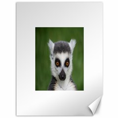 Ring Tailed Lemur Canvas 36  x 48  (Unframed)
