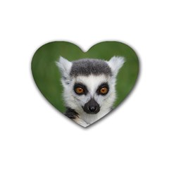 Ring Tailed Lemur Drink Coasters 4 Pack (Heart)