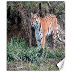Tiger Canvas 20  x 24  (Unframed)
