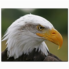 Bald Eagle (2) Canvas 8  x 10  (Unframed)